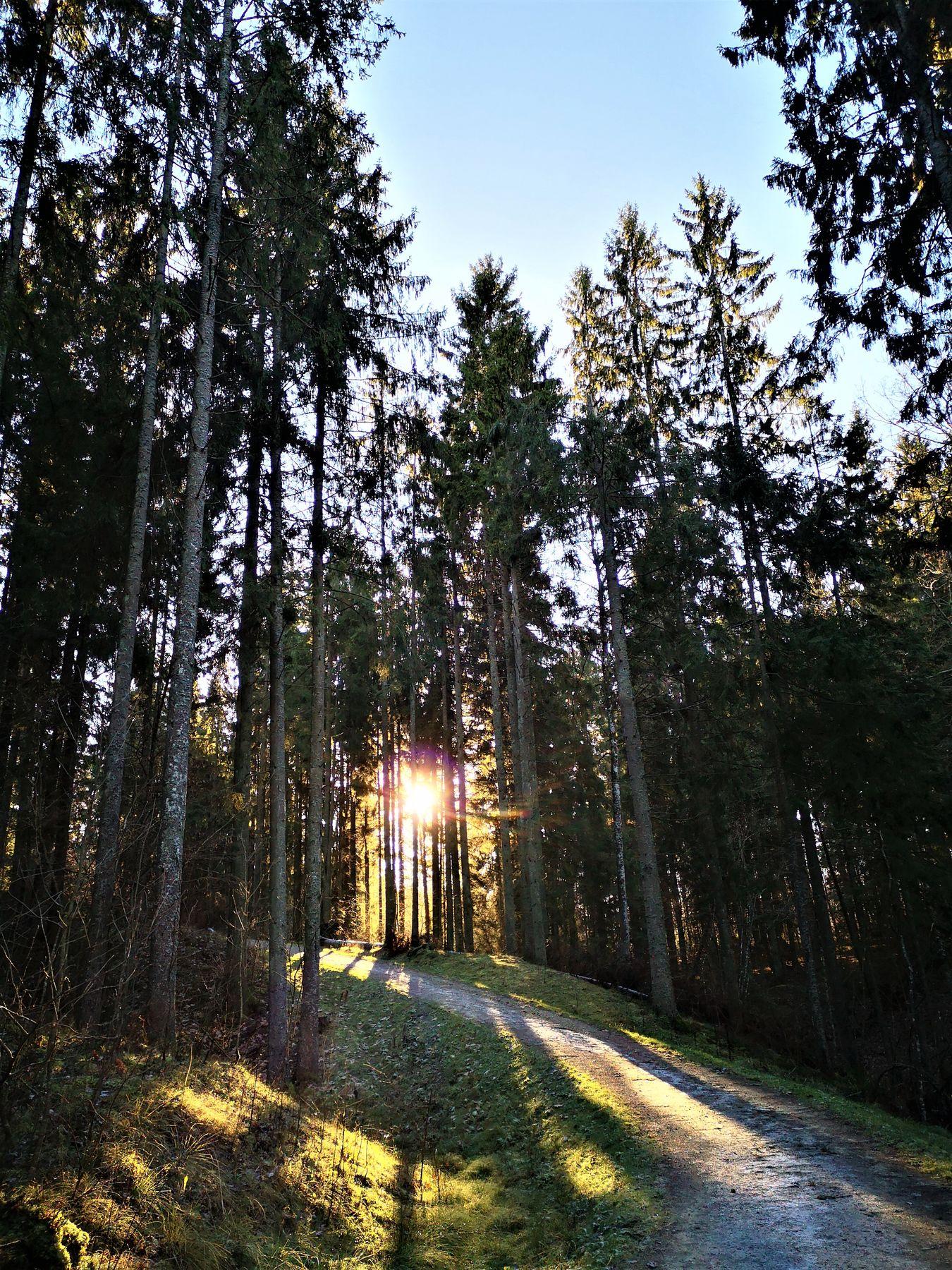 8_Seire_trail_antanaviciute_path
