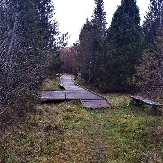 _aukliai_The_beginning_of_wooden_path