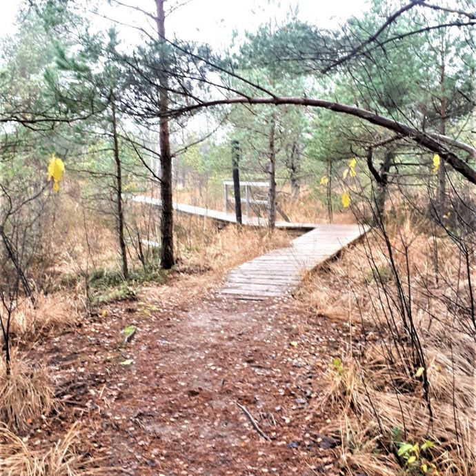 Aukstumala_begins_the_wooden_trail