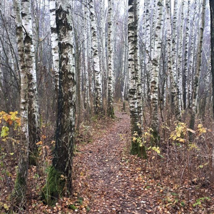 Aukstumala_the_trail