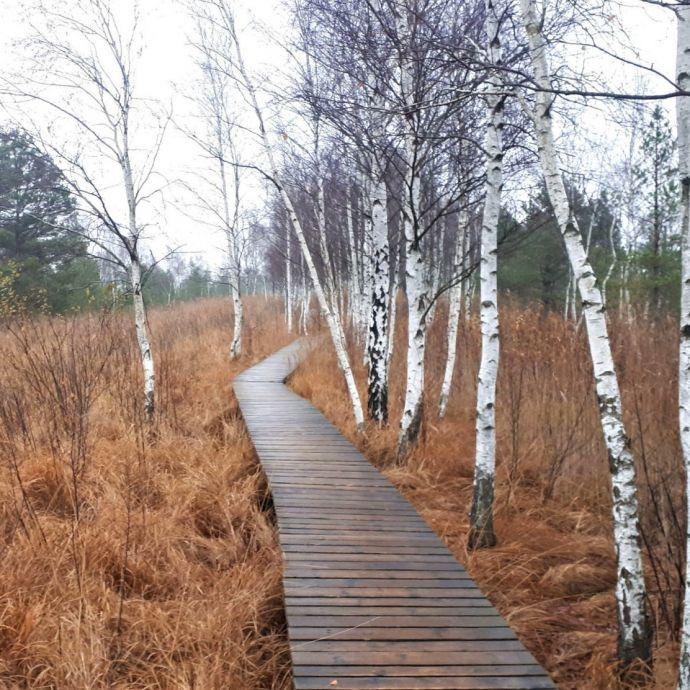 Aukstumala_wooden_trail_2