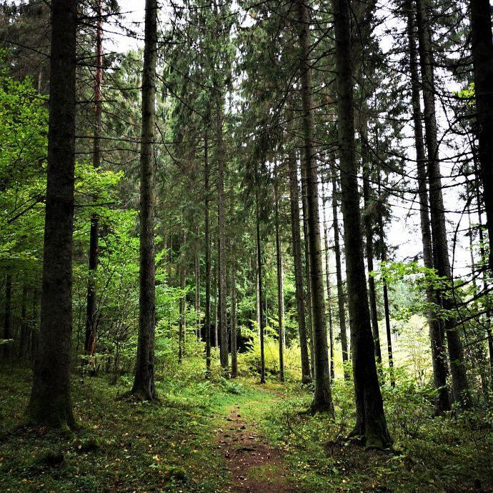 Mikytai_trail_Antanaviciute_R_path